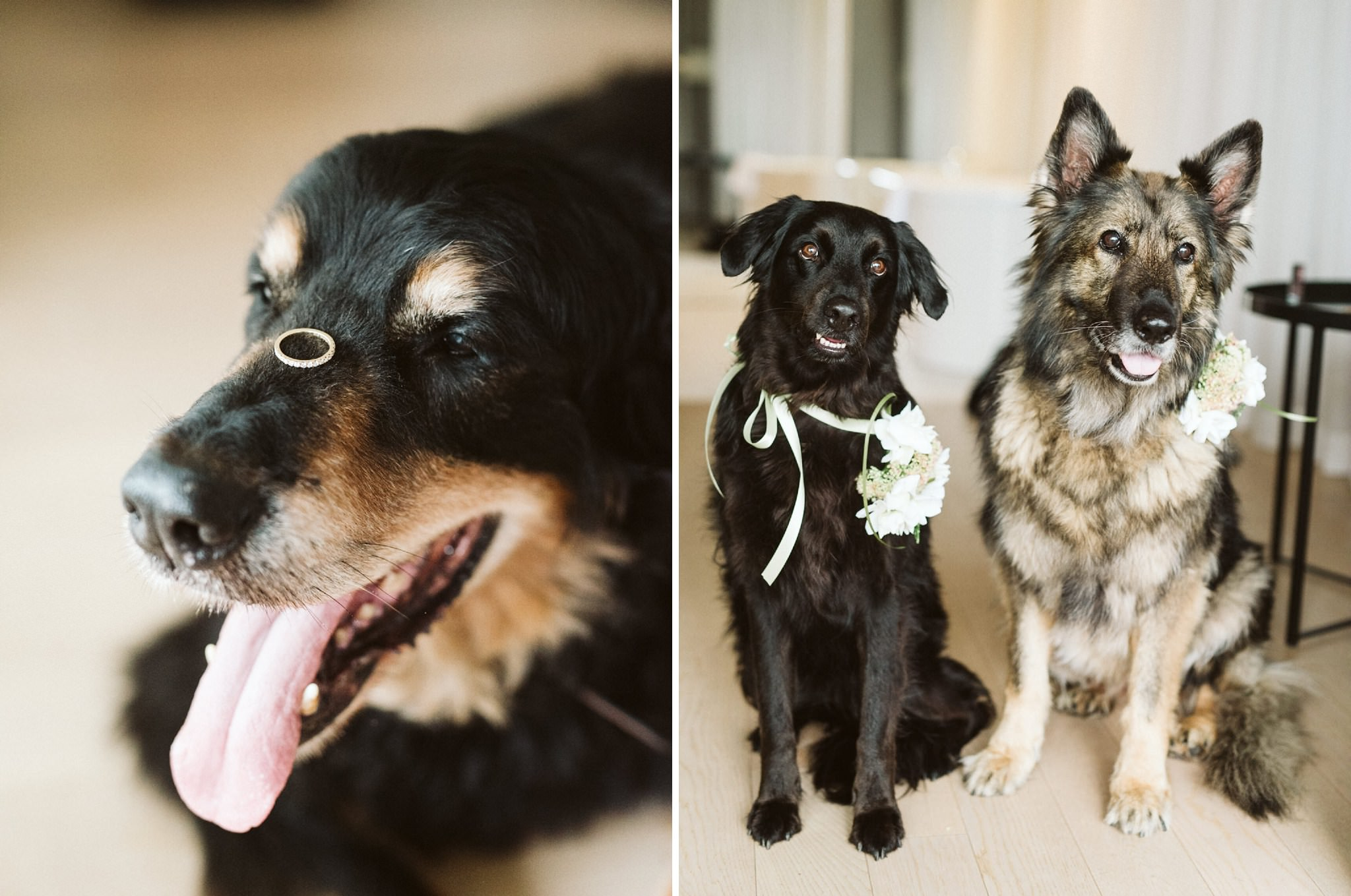 Ring On Dogs Nose Wedding
