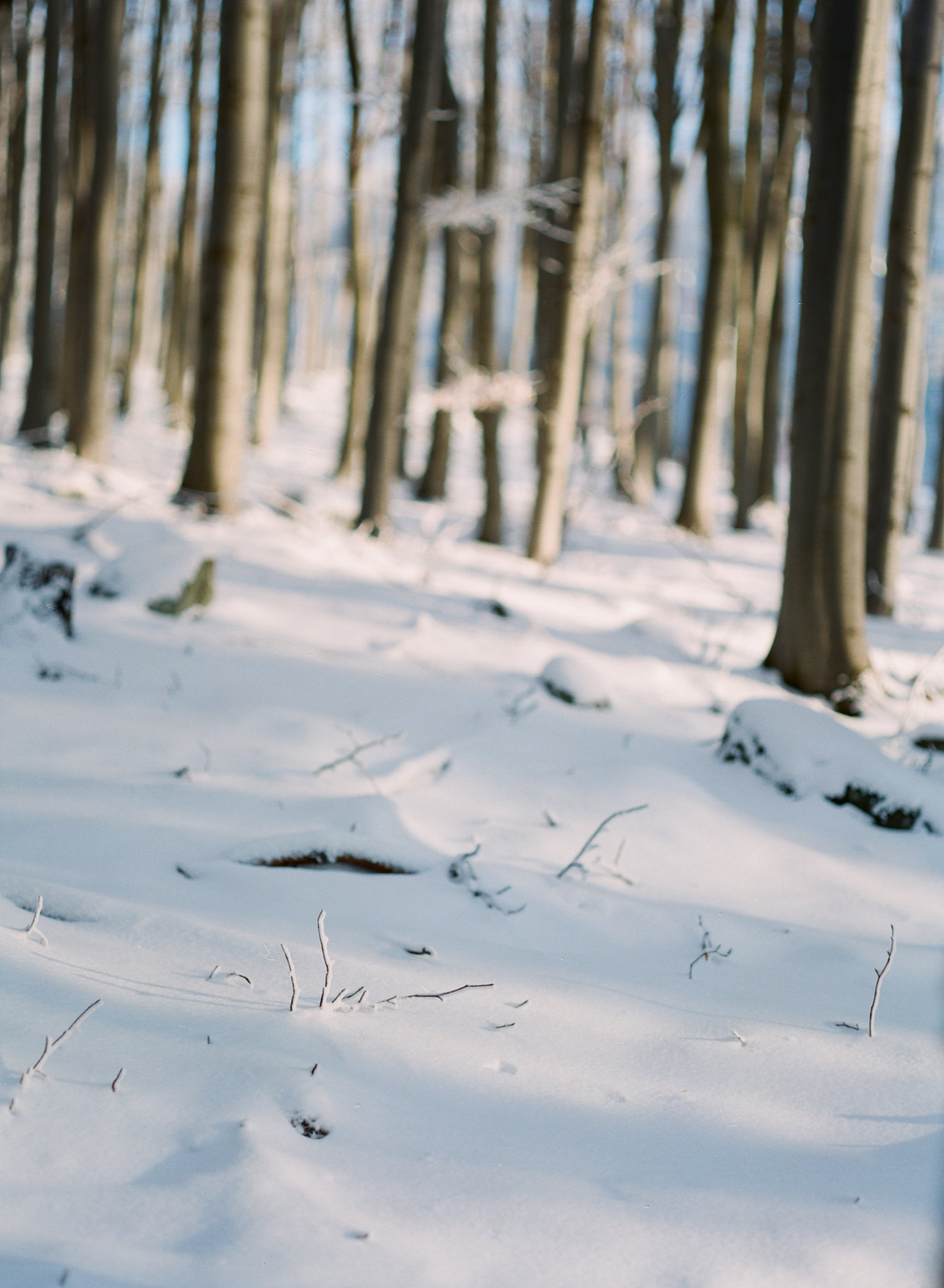Exploring The Snowy Woods